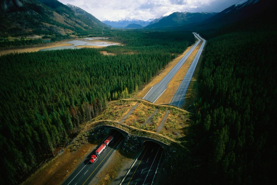 Экодук в Альберте, Канада